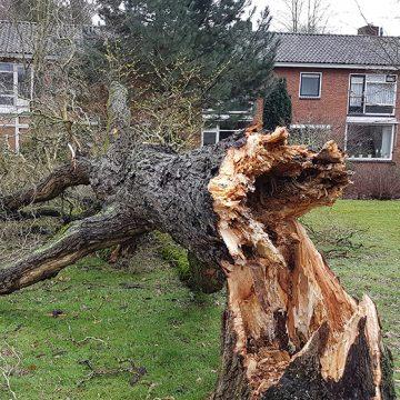 Gildebor druk in de weer met opruimen stormschade