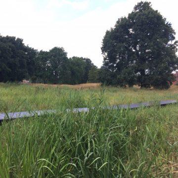 Natuur in de wijk: het Broekpark in de Hengelose wijk Slangenbeek
