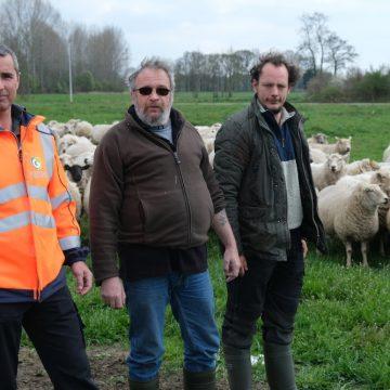 """""""Martin, heb je wat met schapen?"""""""